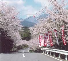 桜まつり②